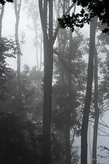 Op een mistige september ochtend - En una brumosa mañana de septiembre - On a foggy September morning