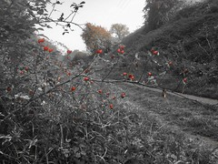 Photo of Four seasons on the old line: autumn