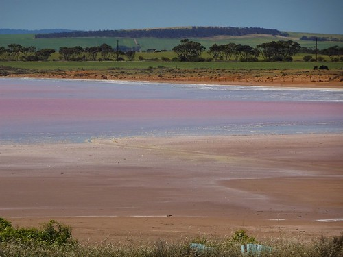 Lochiel near Snowtown South Australia. Lake Bumbunga which was used for salt gathering. Creeks from  the Hummock Ranges flow into the lake which has no river to drain it hence the built up of algae and salt. .