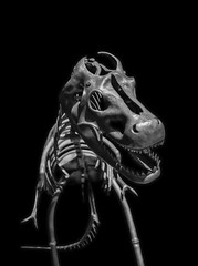 Helfštýn-saurus rex CZ