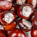 Raw fresh chestnut background, top view