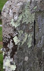 Photo of Lichen