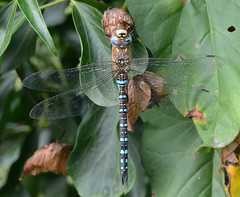 Photo of Migrant Hawker