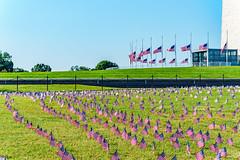 2020.09.23 Covid Memorial Project, Washington, DC USA 267 17024