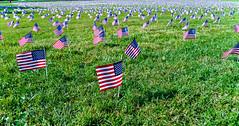 2020.09.23 Covid Memorial Project, Washington, DC USA 267 17017