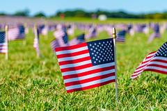 2020.09.23 Covid Memorial Project, Washington, DC USA 267 17014