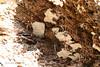 Fungus inside a dead tree