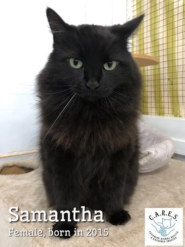 SAMANTHA  Female  5 yrs