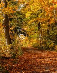 Fall glory at Scottsdale Farm