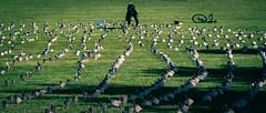 2020.09.23 Ruth Bader Ginsburg at the Supreme Court, Washington, DC USA 267 105243