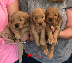 Bailey Boys pic 2 9-25
