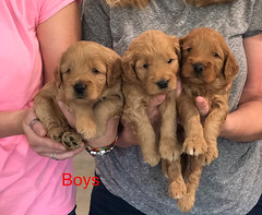 Bailey Boys 9-25