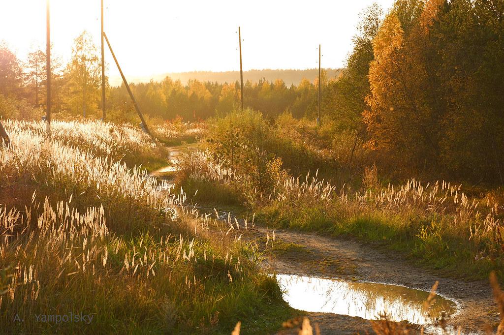 фото: Осенние травы на закате