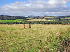 Photo of Angus Farming Country