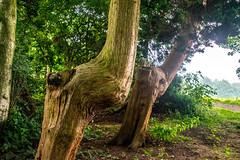 Photo of Bendy trees