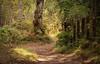 Birks Paths