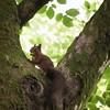 Low Res Squirrel