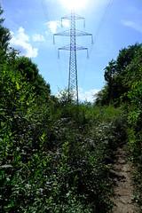 Forest trail @ Bois Chébé @ Satigny @ Geneva
