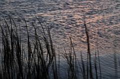 Kings Creek marsh in Hayes, Virginia