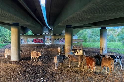 Weiden unter der Autobahn - Pastures under the motorway