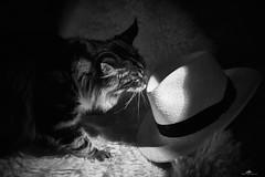 2020-09-29 22.22.22 - Wherever I Lay My Hat, Sasquash, Et eller andet, 273-366, Uge 40, Assentoft, Randers - _DSC4040 - ©Anders Gisle Larsson