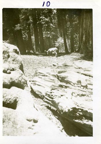 [CALIFORNIA-O-0018] Sequoia National Park