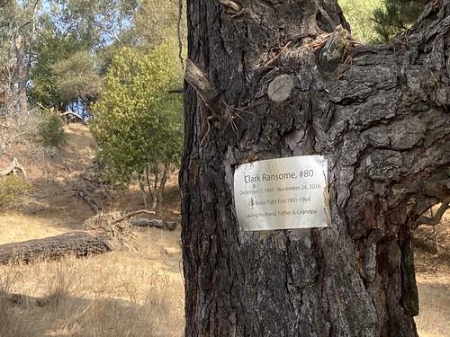 Memorial for a Cal Bear