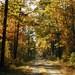 Great Dismal Swamp National Wildlife Refuge: Peaks October 22 – October 28