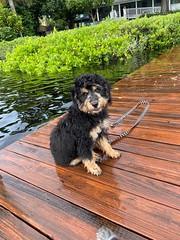 Ozzy enjoying the water