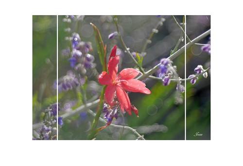 September Garden 3