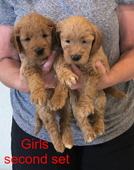 Bailey Girls second set 10-2