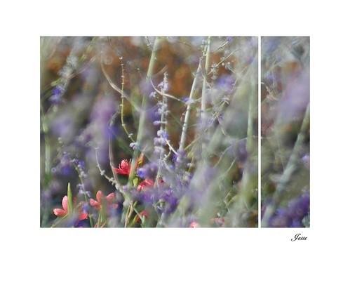 September Garden 4