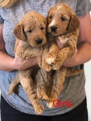 Bailey Girls 10-2
