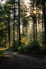Sunburst @ the woods
