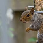 Daily garden visitor