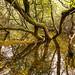 Norton Canes, Cannock Chase, England - mirror image