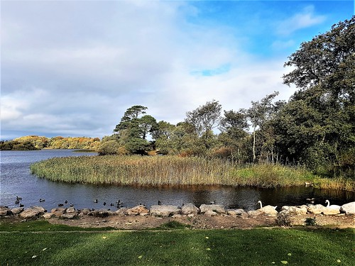 Ireland, Killarney, Ross Castle - shore of Lough Leane