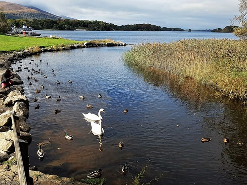 Ireland, Killarney, Ross Castle - stream leading to Lough Leane