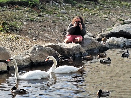 Ireland, Killarney, Ross Castle - photographing swans