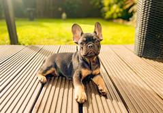 Photo of Dexter Hugo Boss.