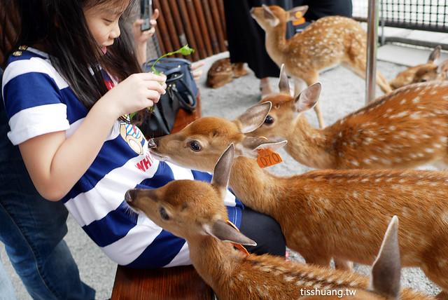 張美阿嬤宜蘭餵鹿景點