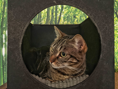 Lola Bamboo Cat