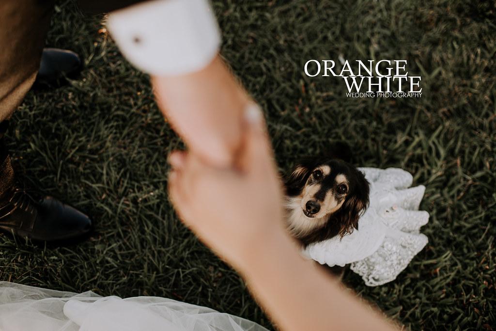 橘子白,攝影,工作室,Anita俐婷,女攝影師,便宜,寵物寫真,臘腸,寵物入鏡,狗,美式風格,自助婚紗,自主婚紗,寵物婚紗,寵物寫真,大佳河濱公園,寶藏巖,花圈鞦韆,逆光