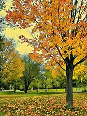 Fall..... (explored)