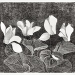 Cyclamen (1920) print in high resolution by Samuel Jessurun de Mesquita. Original from The Rijksmuseum. Digitally enhanced by rawpixel. thumbnail