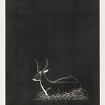 Waterbuck (Waterbok) (1921) print in high resolution by Samuel Jessurun de Mesquita. Original from The Rijksmuseum. Digitally enhanced by rawpixel. thumbnail