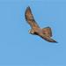 Brown Falcon: Mission Critical