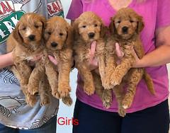 Bailey Girls 10-9