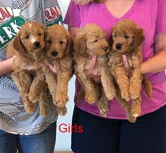 Bailey Girls pic 3 10-9
