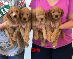 Bailey Girls pic 4 10-9